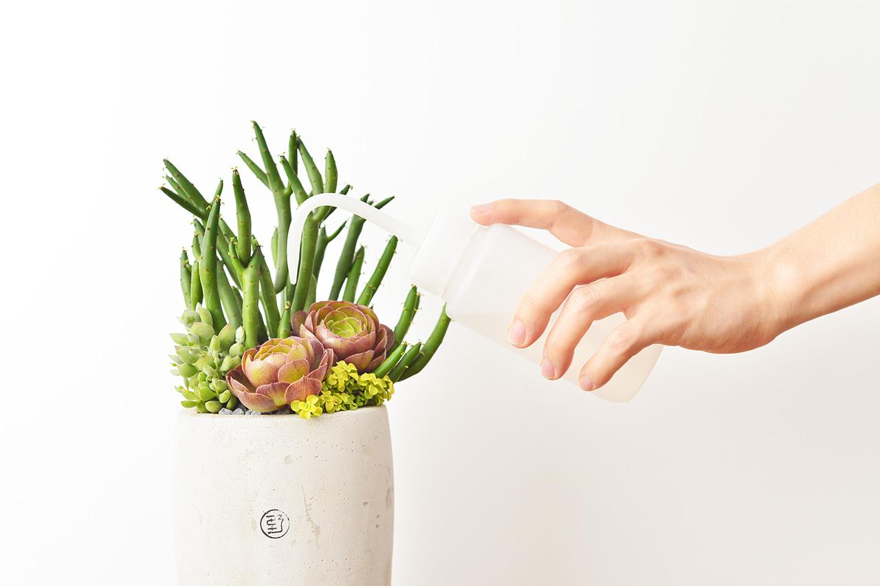 多肉植物照顧