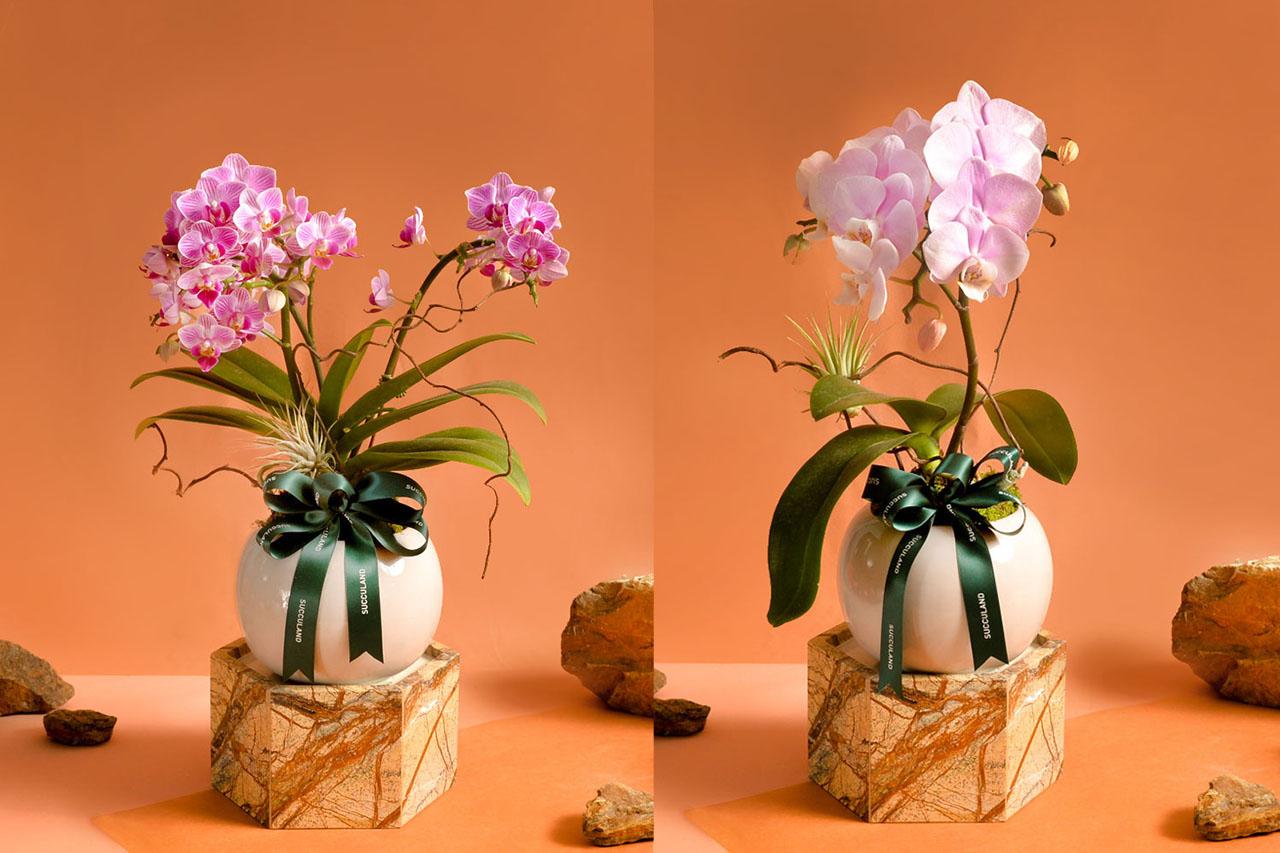 2021 年春節植物禮盒 2021有肉蘭花盆栽(拼2)