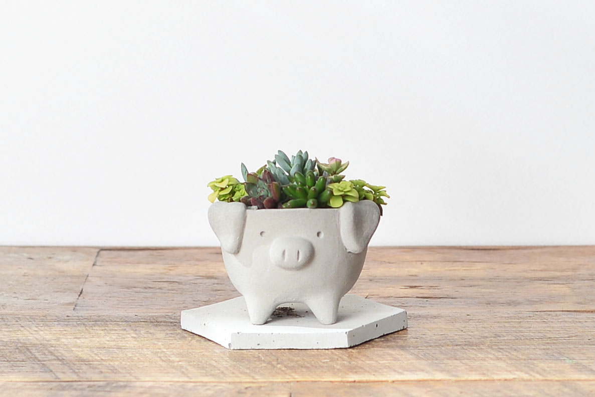 小豬造型禮物