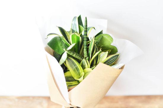 以陪伴為名植物為禮,2021 七夕情人節「植束」予你 2021 七夕情人節花束 多肉植物虎尾蘭花束2