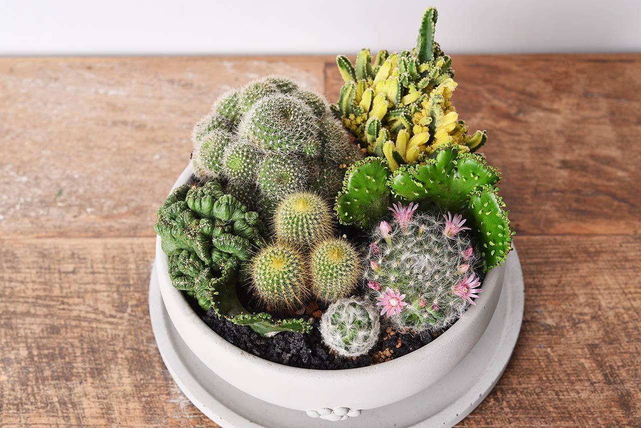 圓滿仙人掌組+多肉植物燈 ONF植物燈3