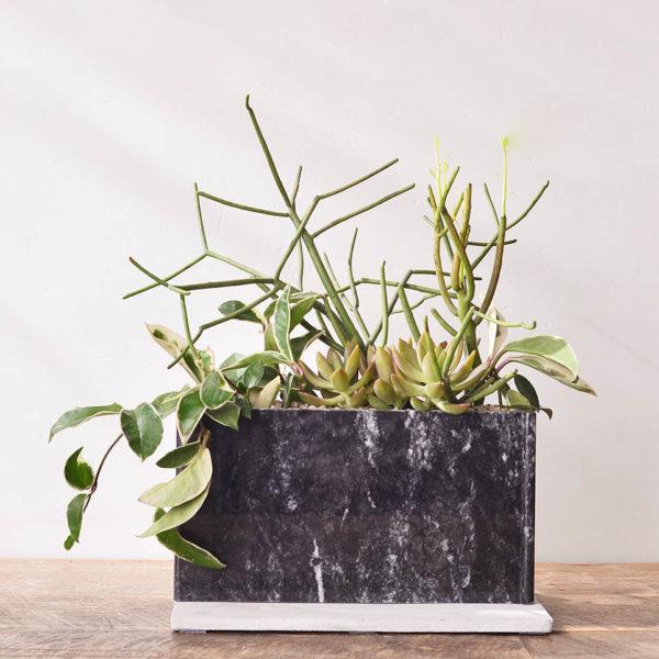 居家植栽組_宅在家就是要種植物6