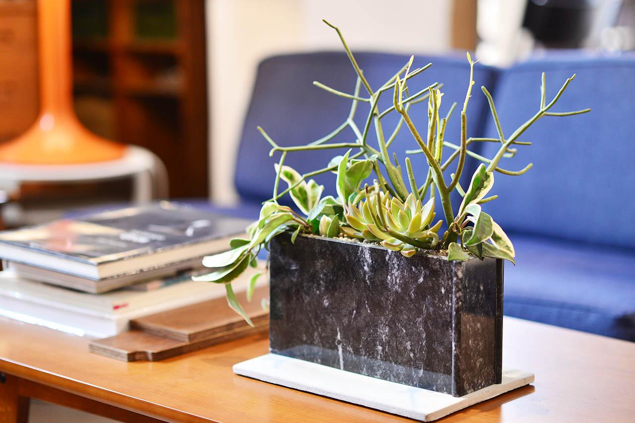 大理石桌上室內盆栽