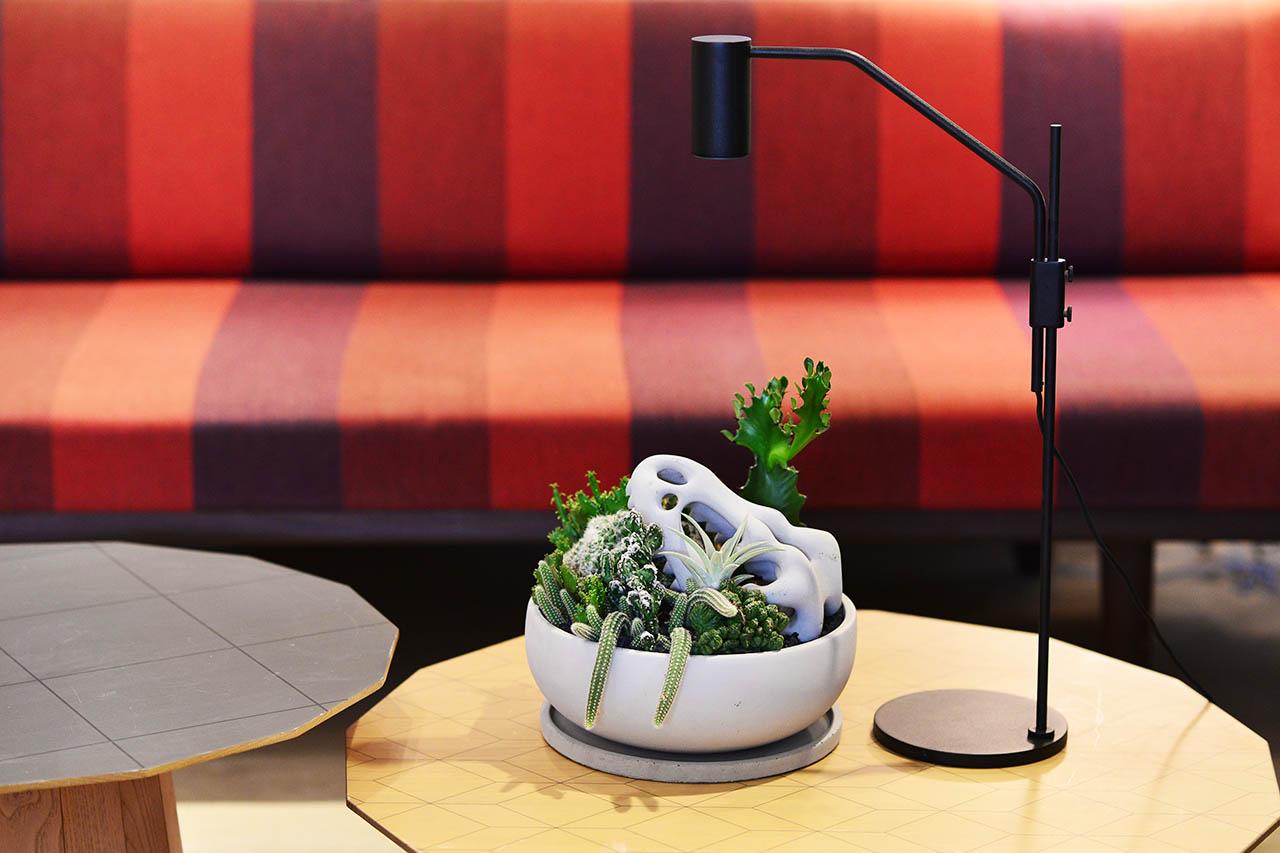 巨型恐龍化石盆栽+多肉植物燈 OURA植物燈11