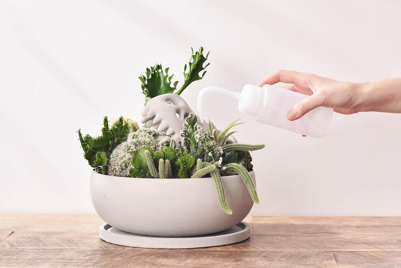 使用多肉植物澆水器