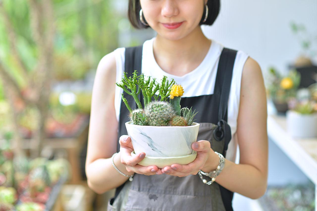 大理石紋盆栽