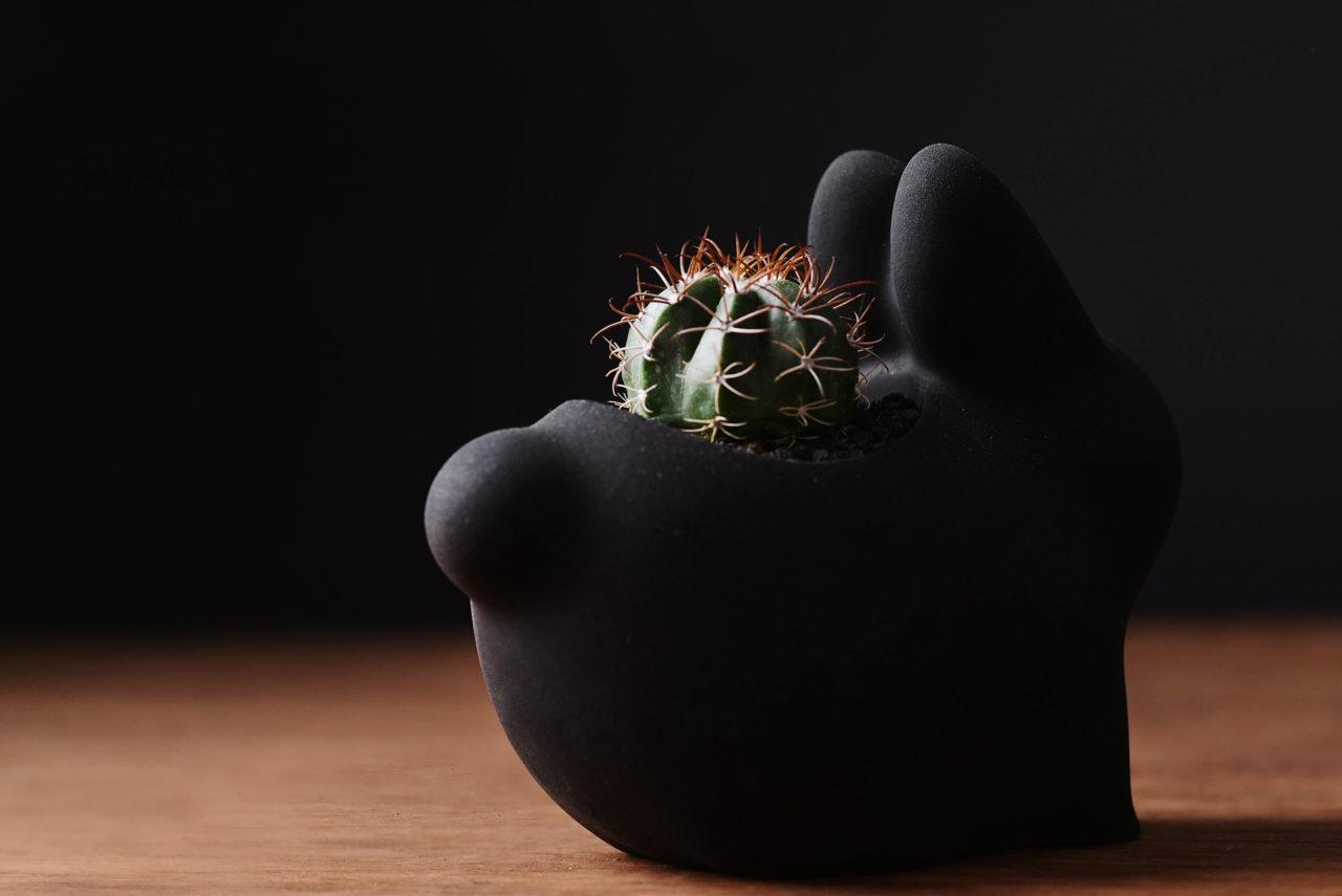 中秋月兔仙人掌