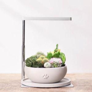 圓滿仙人掌組+多肉植物燈 ONF植物燈與室內盆栽的搭配1 拷貝