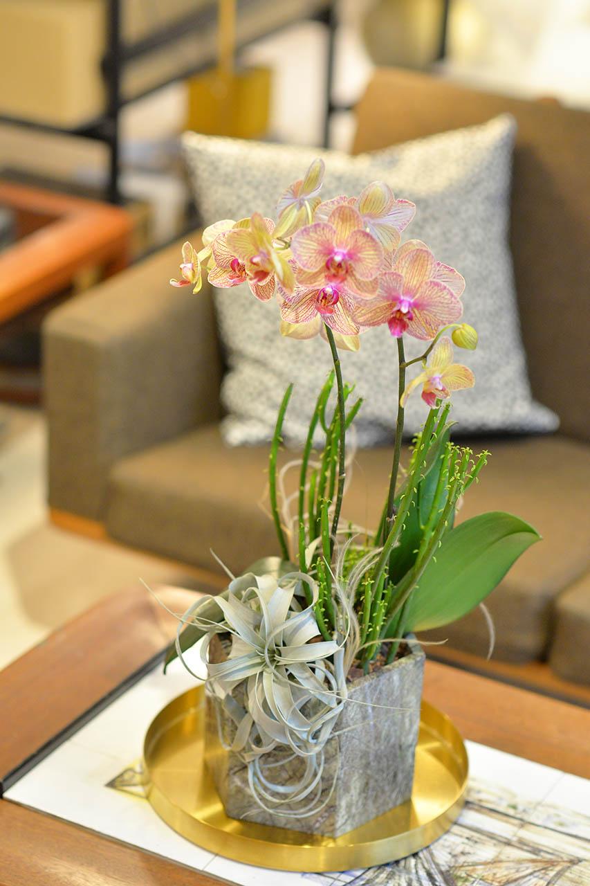 蘭花盆栽製作