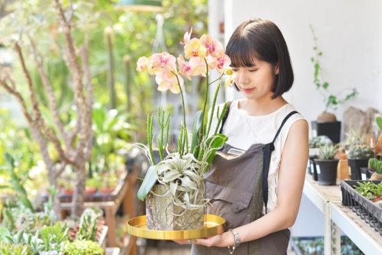 空氣鳳梨栽培、照顧方法教學 8