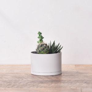 居家植栽與DIY組2