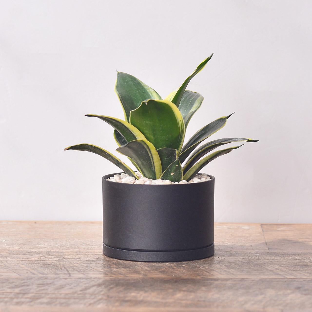居家植栽 DIY 組合包 - 單株組 23 1