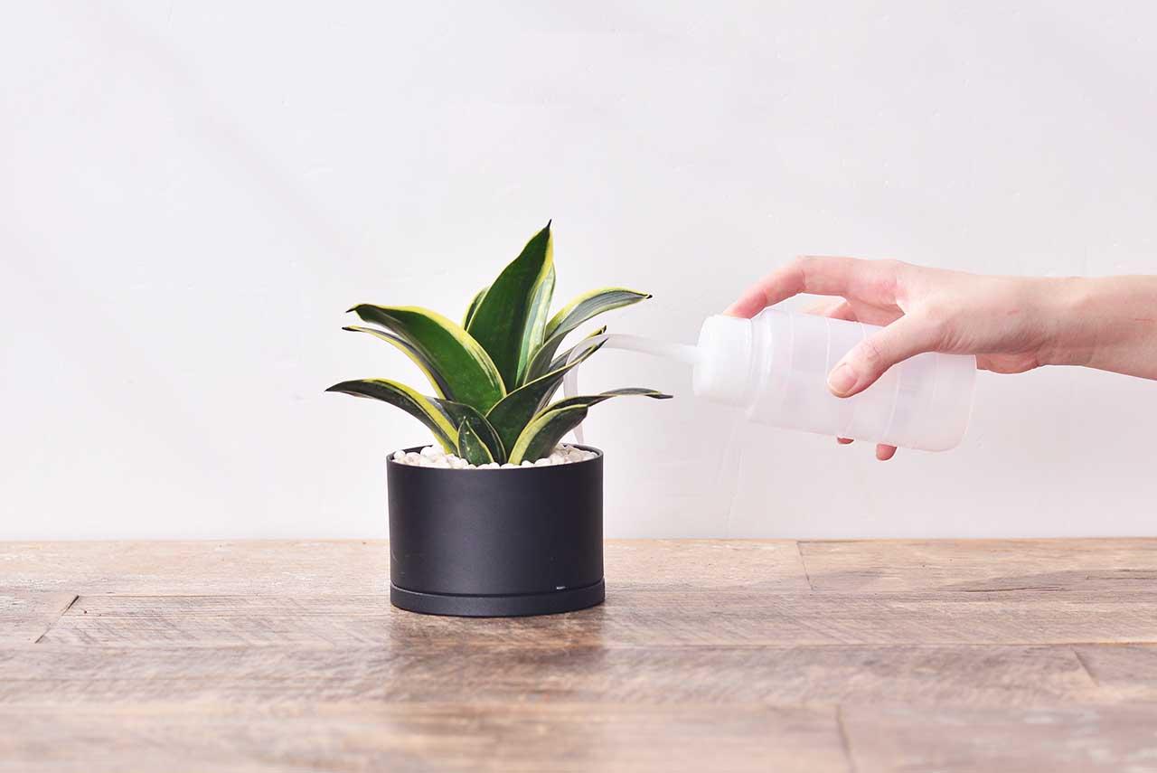 居家植栽 DIY 組合包 - 單株組 24