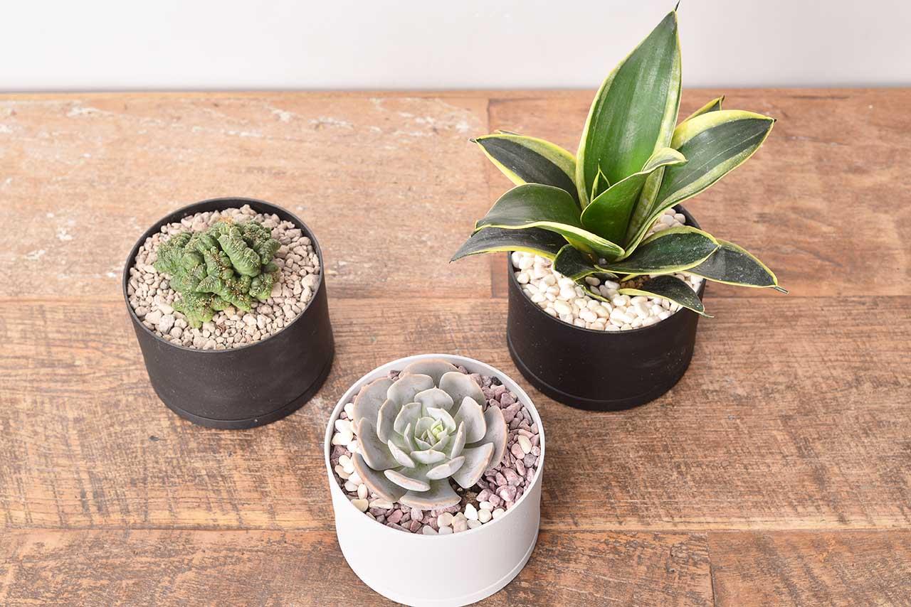 新手植物選擇