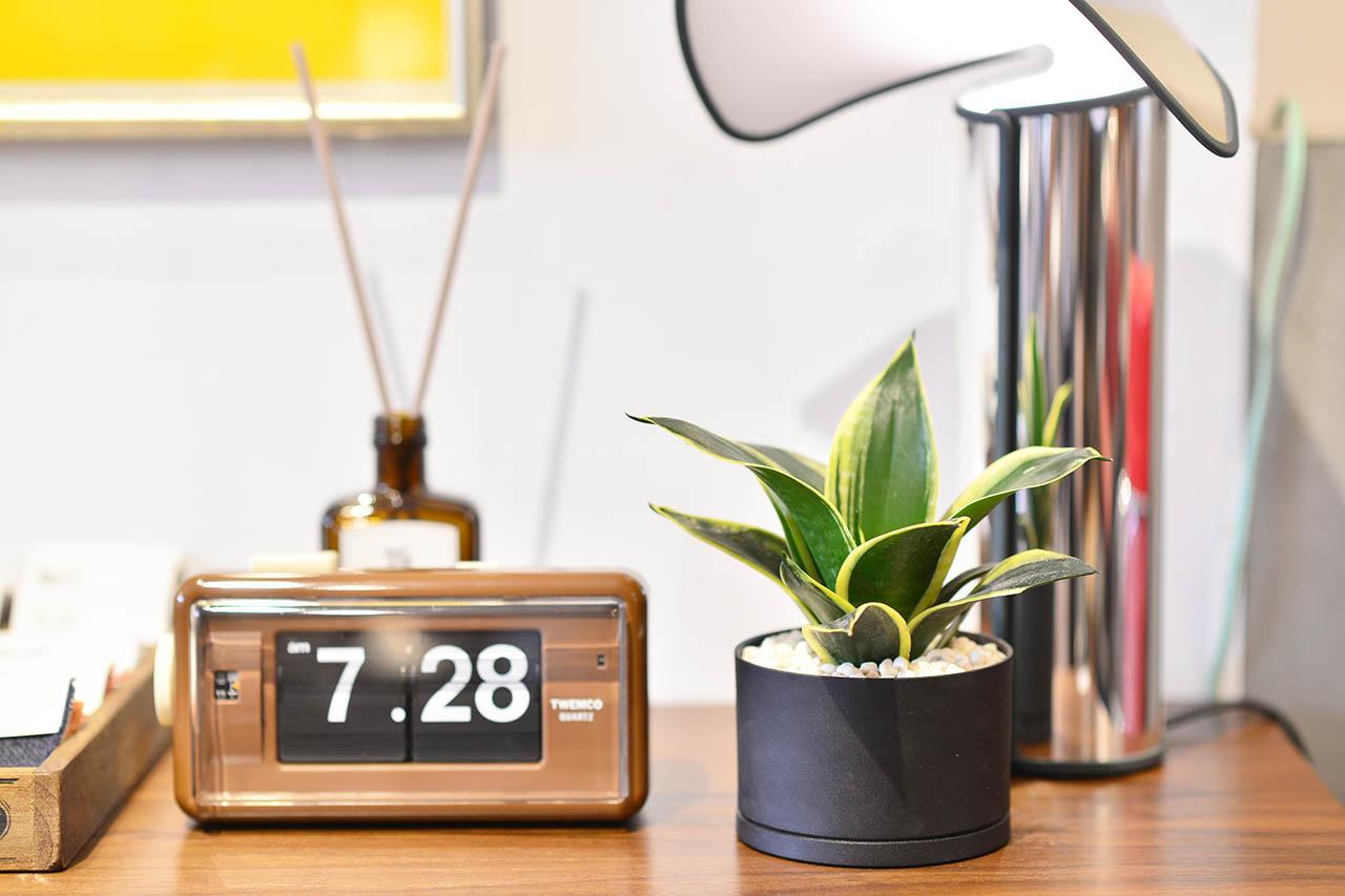 虎尾蘭盆栽桌上型