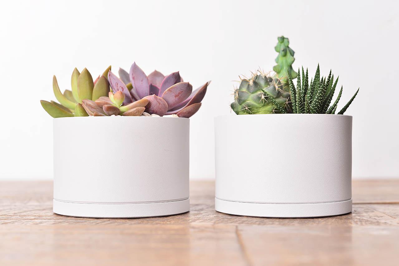 居家植栽 DIY 組合包 - 多株組 5
