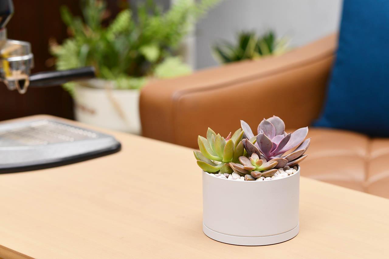 桌上盆栽diy