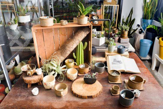 室內種植 NG 的多肉植物 (1):銀杏木 雅樂之舞 4
