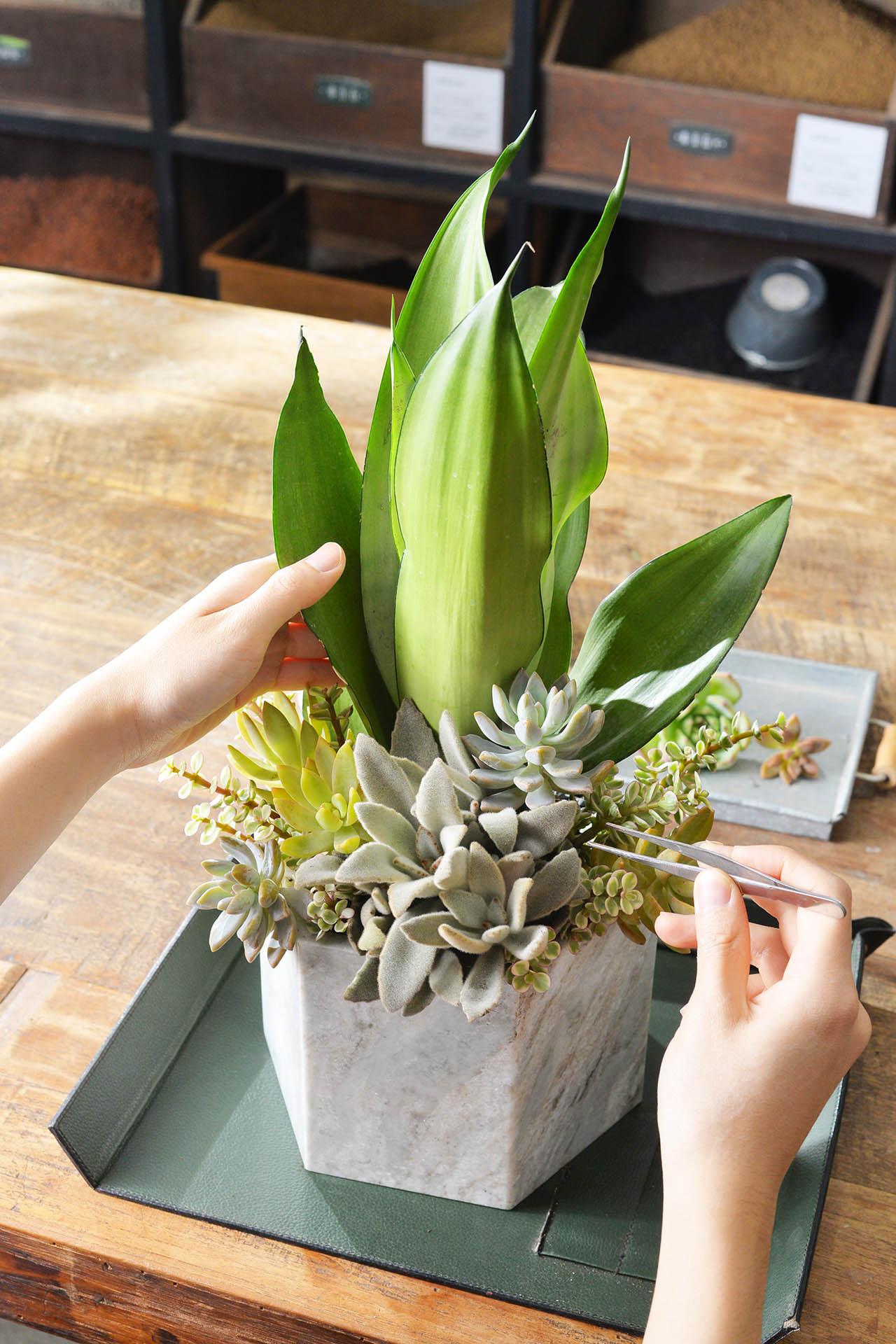 虎尾蘭植栽設計紀錄