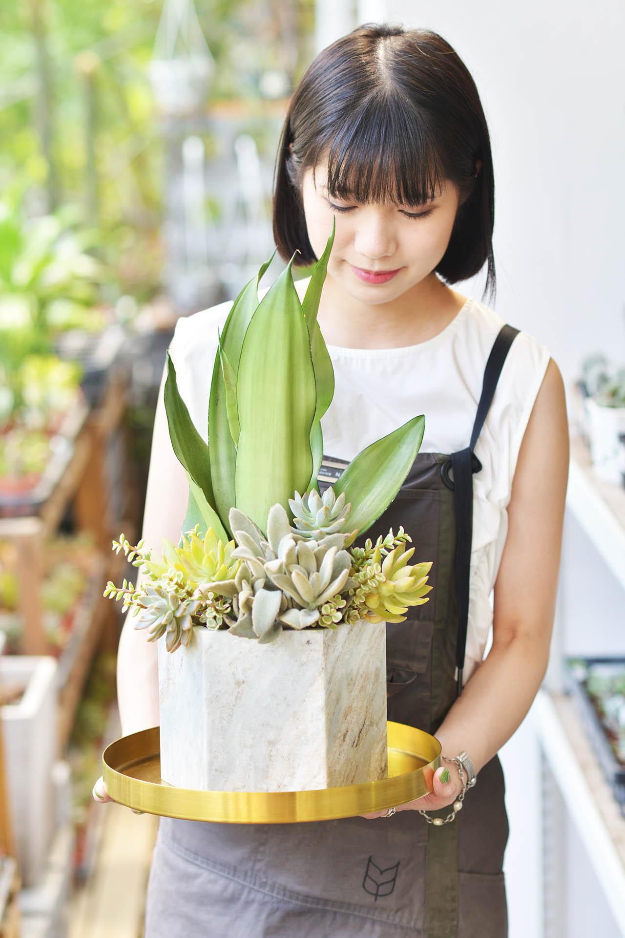 銀后虎尾蘭組合盆栽設計