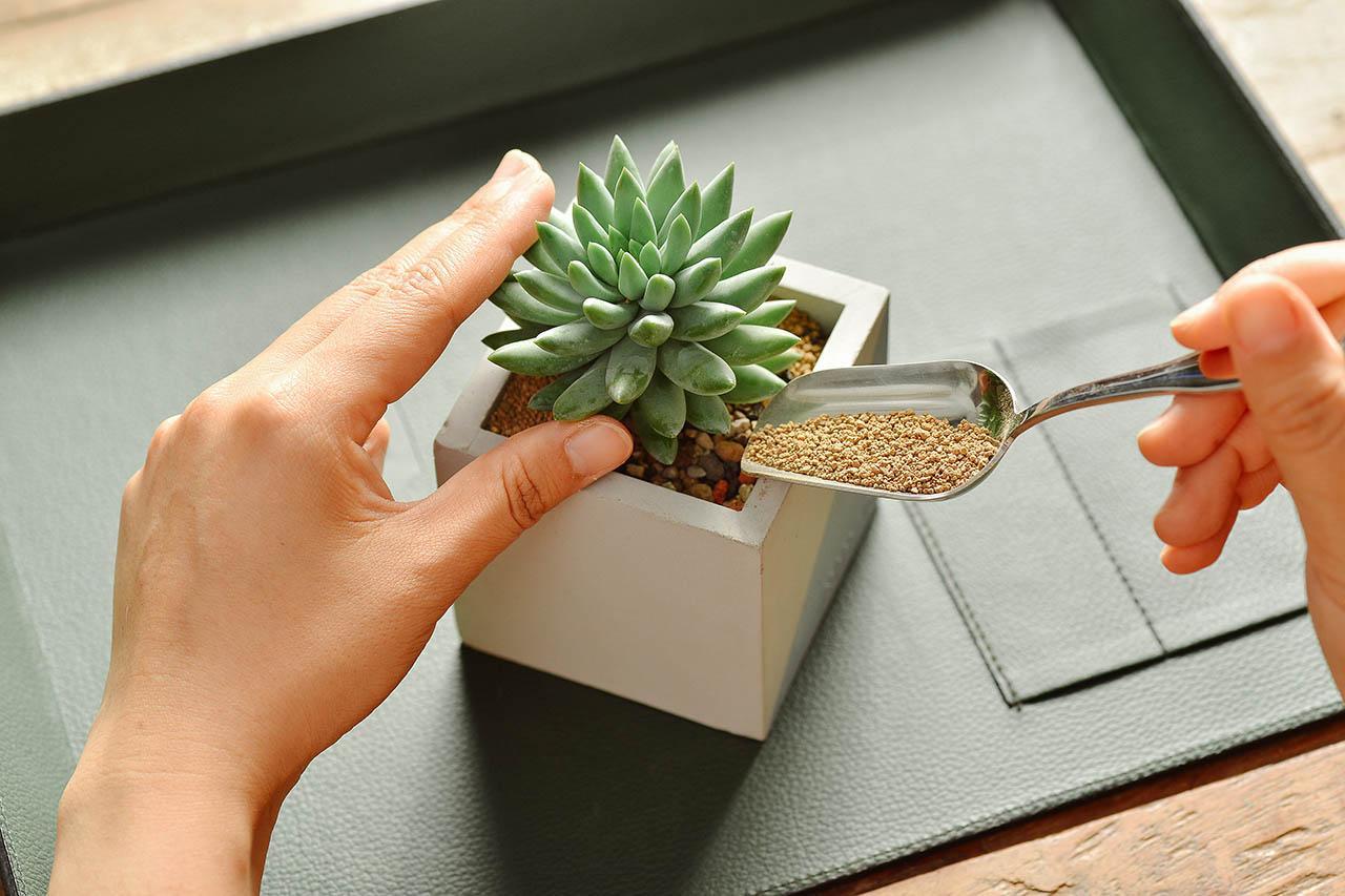 居家植栽 DIY 組合包 - 多株組 1016 美學版組盆步驟 163