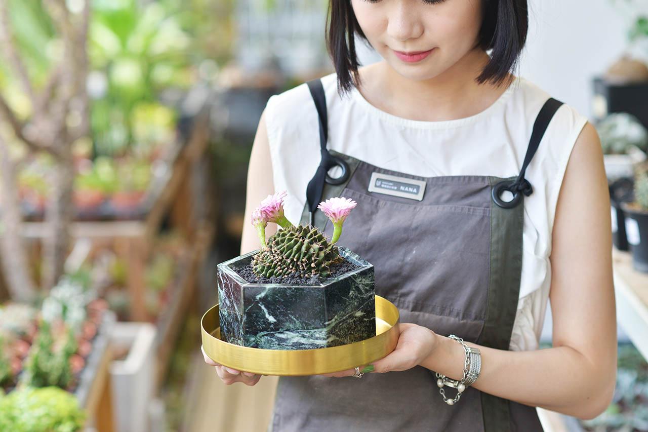 樸花雅器 - 夏樹系列 8月網路花店送禮盆栽拍攝8 1