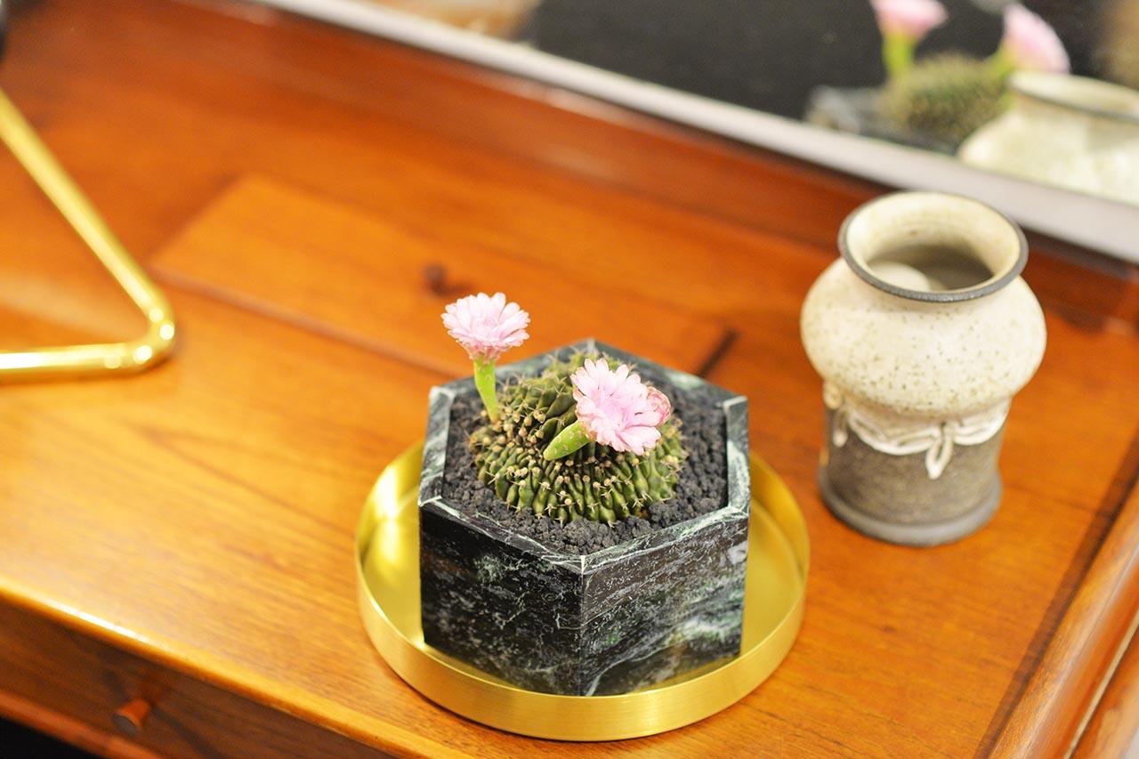 仙人掌盆栽禮物