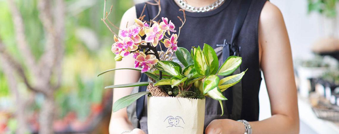 開幕送禮推薦盆栽!把最療癒的多肉植物搭配台灣設計師設計盆器,組合成的盆栽最適合開店送禮,圖為蘭花與陶盆