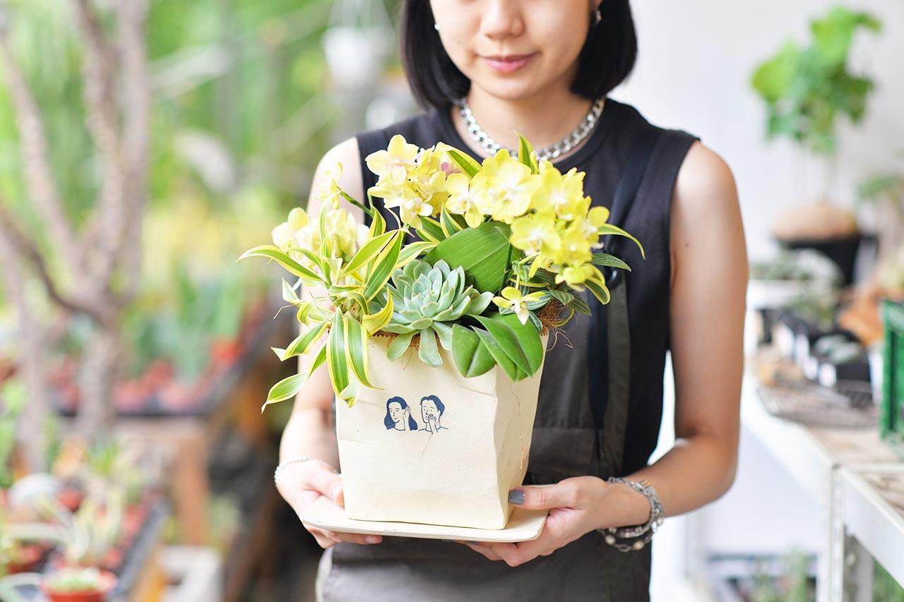蘭花盆栽2022