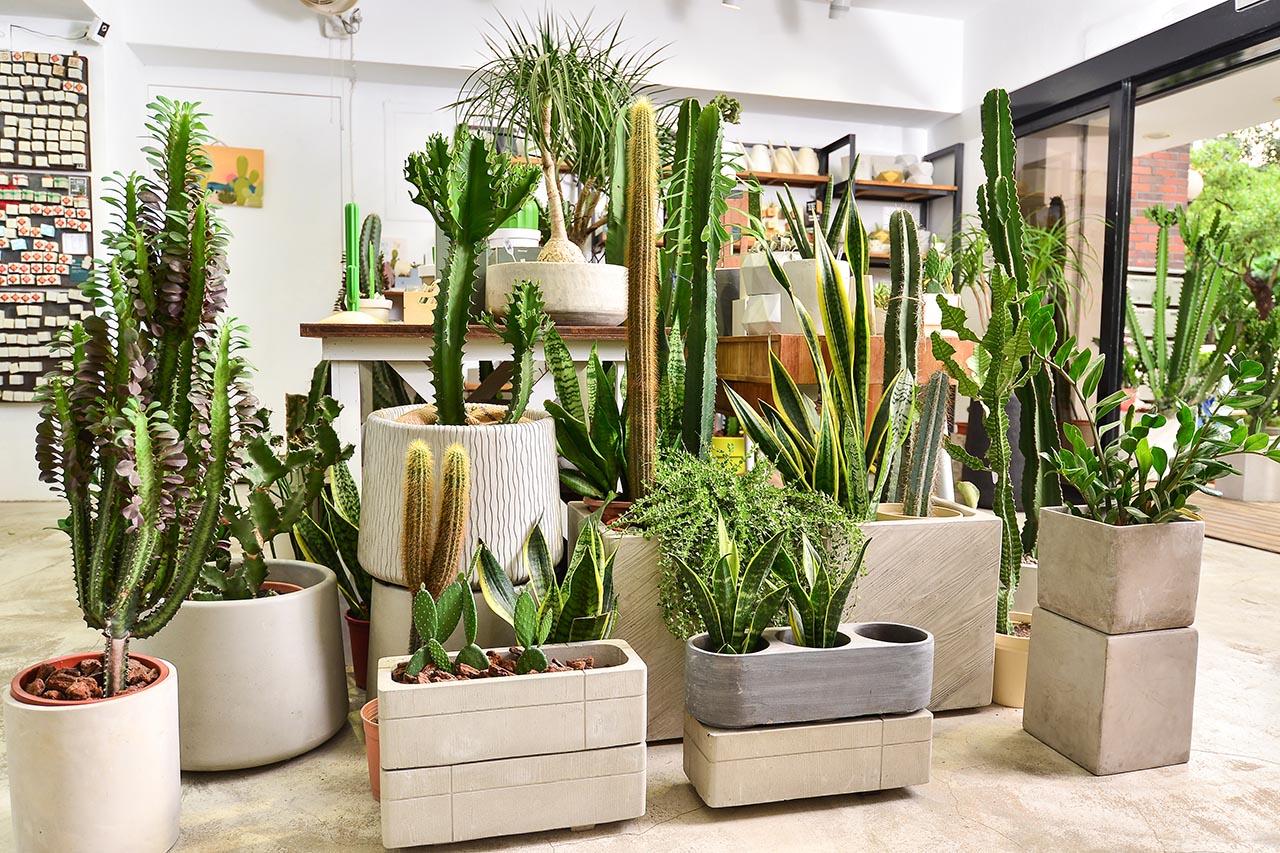蒐集 11 種室內植栽設計裡的綠意光景 造景佈置 植物陳列 都市叢林 綠色城市3