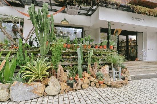 蒐集 11 種室內植栽設計裡的綠意光景 造景佈置 植物陳列 都市叢林 綠色城市5