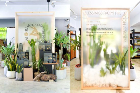 蒐集 11 種室內植栽設計裡的綠意光景 2021 中秋節門市陳列攝影 有肉SUCCULAND15 拷貝