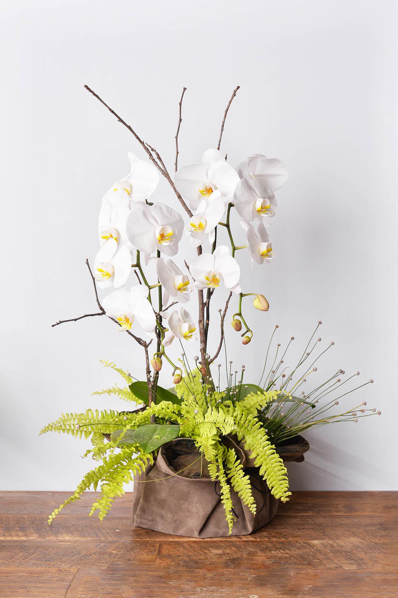 蘭花盆栽創作