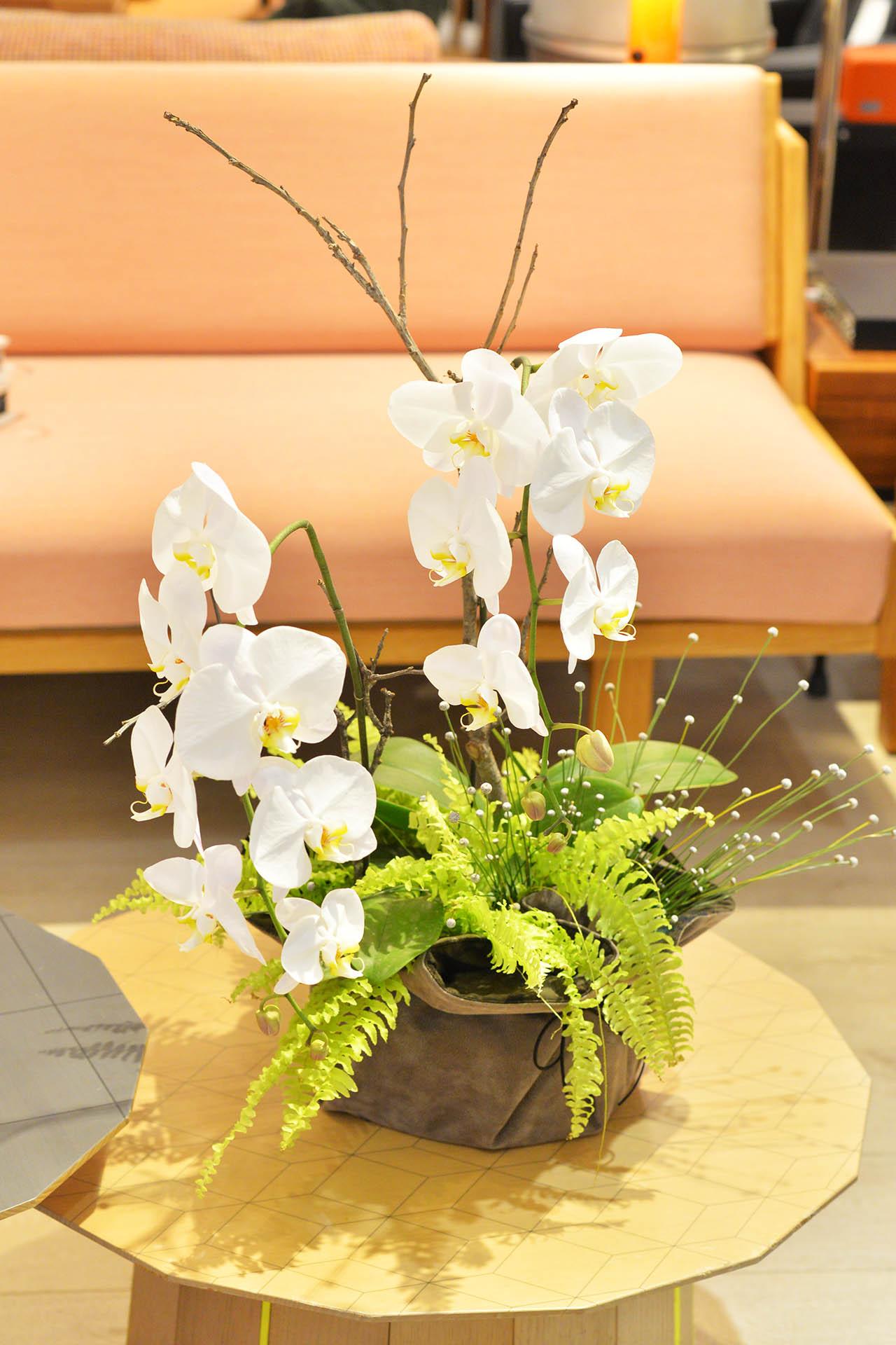 室內蘭花裝飾