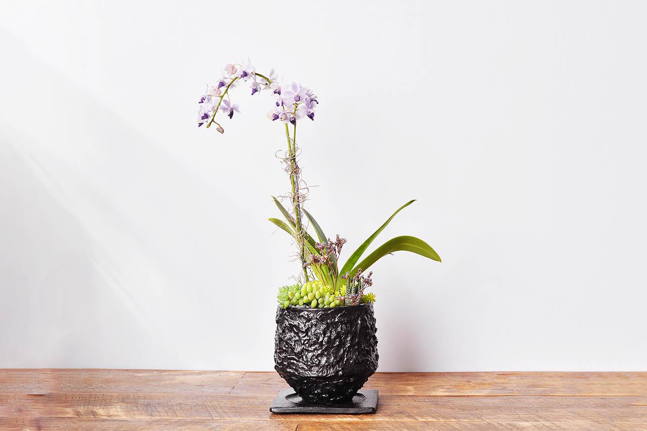 2022 紫色蘭花禮物