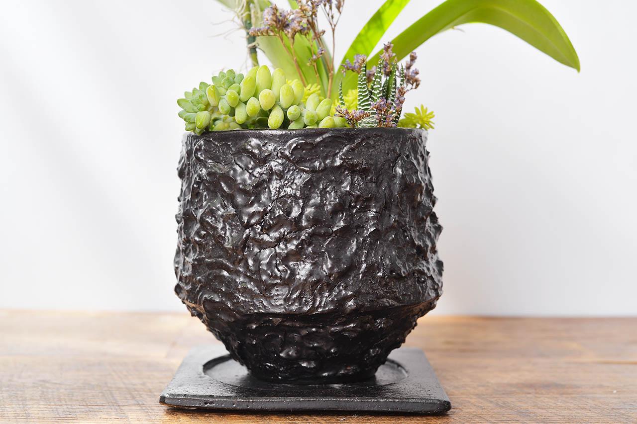 都市裡的紫蘭花 2022 有肉獨賣的紫式部蘭花盆栽.JPG5