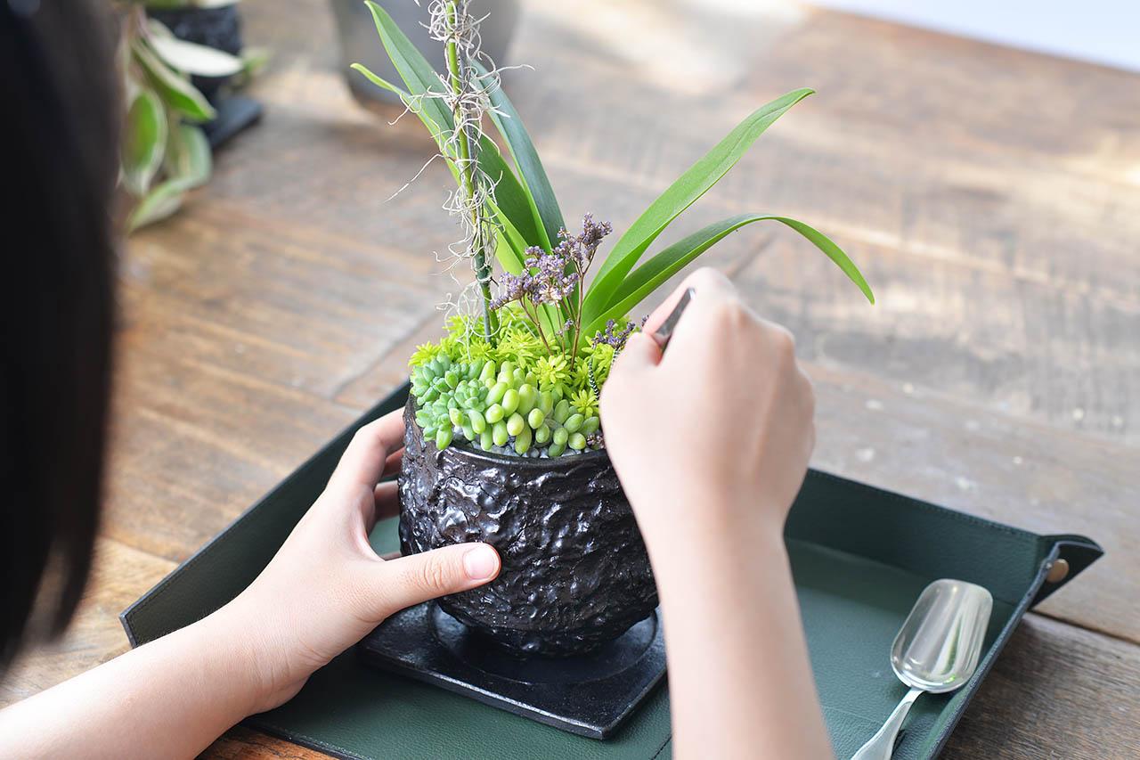 都市裡的紫蘭花 2022 有肉獨賣的紫式部蘭花盆栽.JPG6