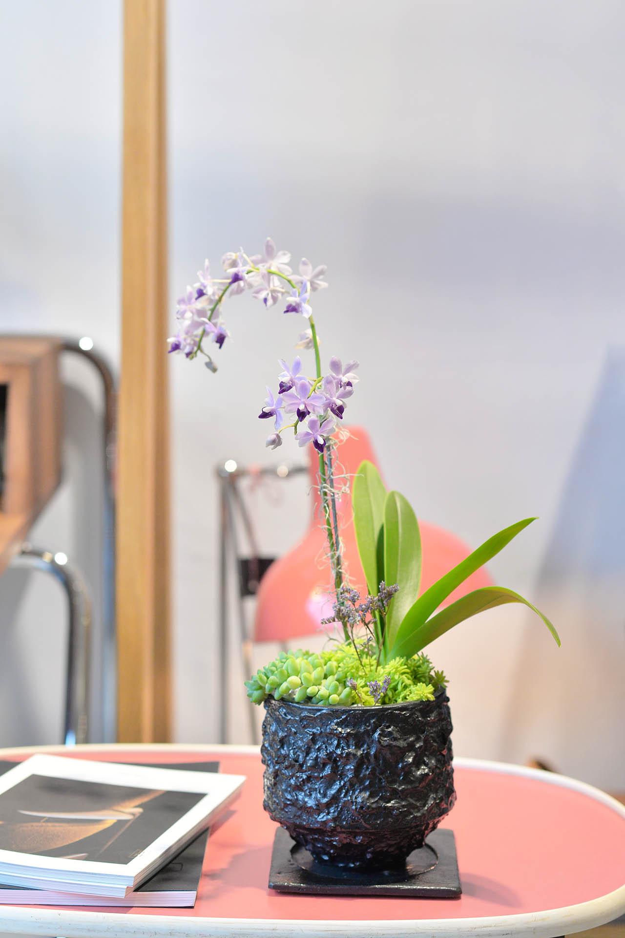 都市裡的紫蘭花 2022 有肉獨賣的紫式部蘭花盆栽.JPG7