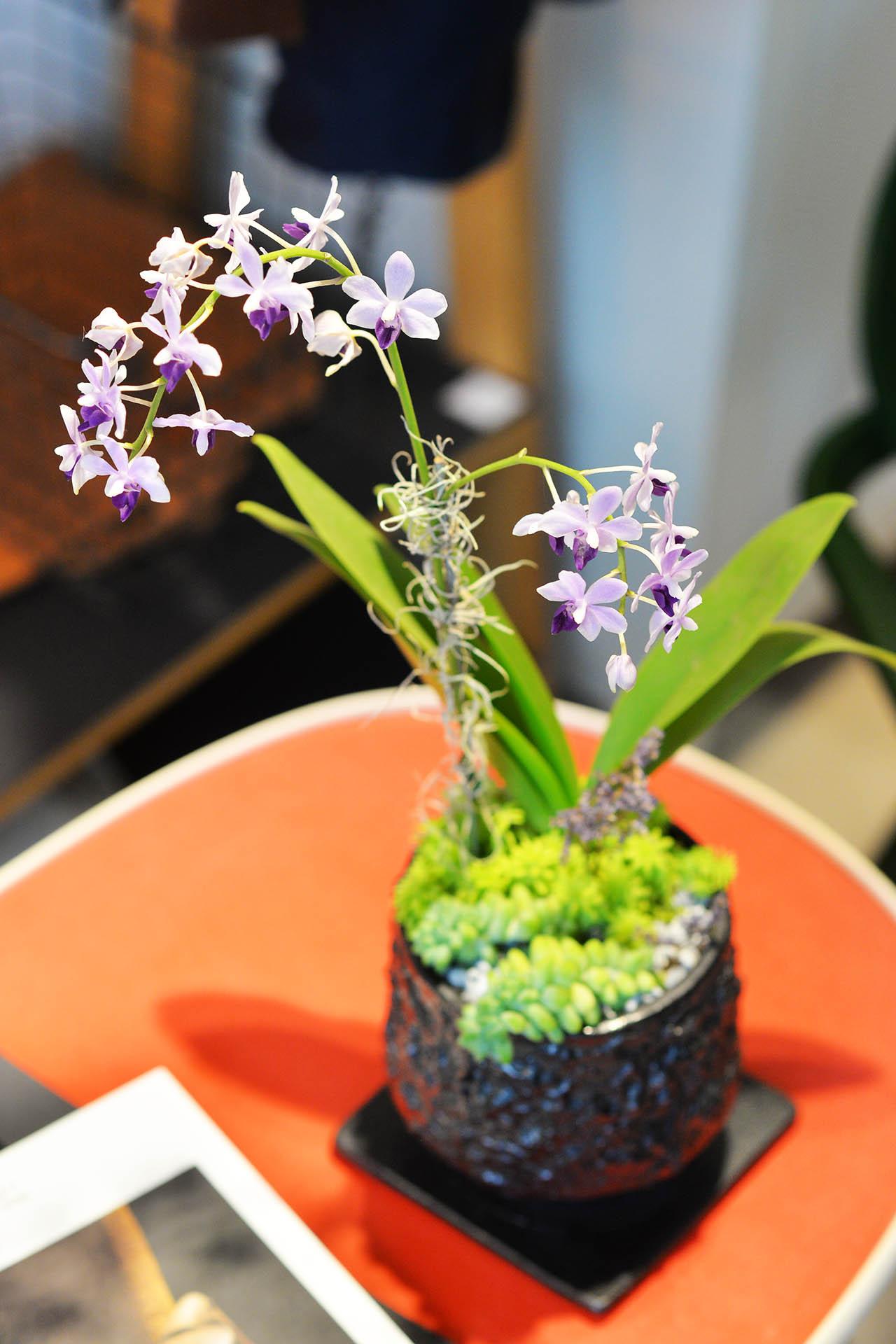 室內紫色蘭花