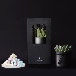 【有肉小食組】白墨盆 - 暗黑&手工糖