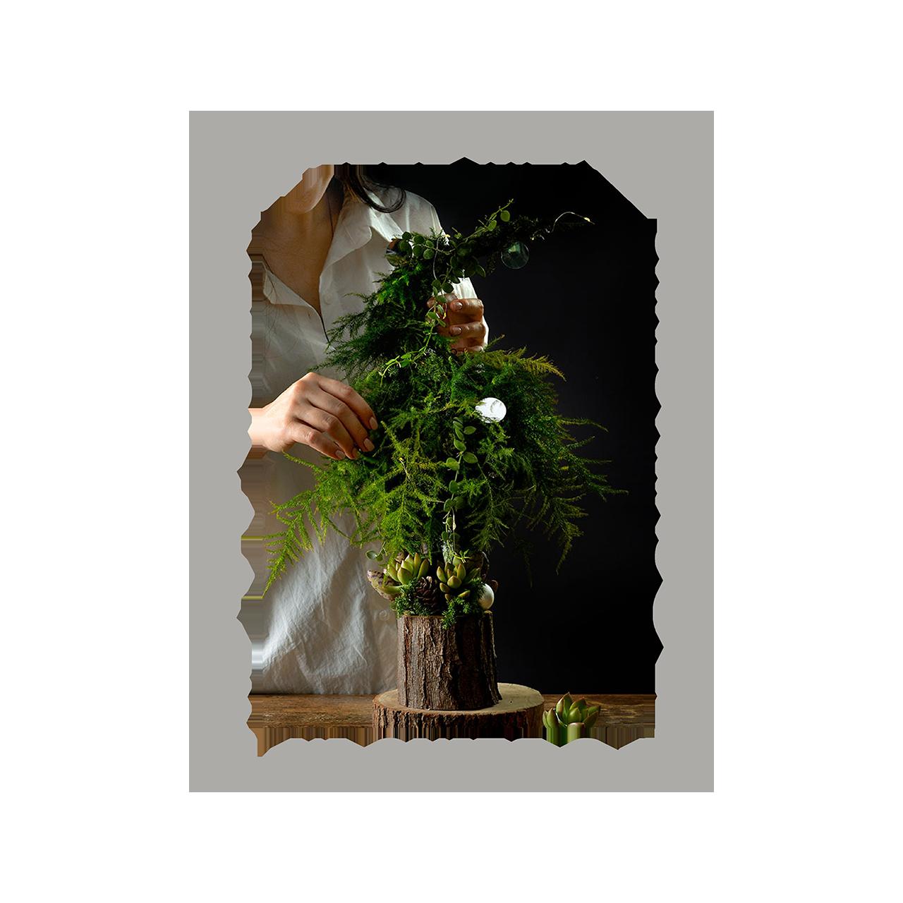 2021 年聖誕節植物禮盒 011