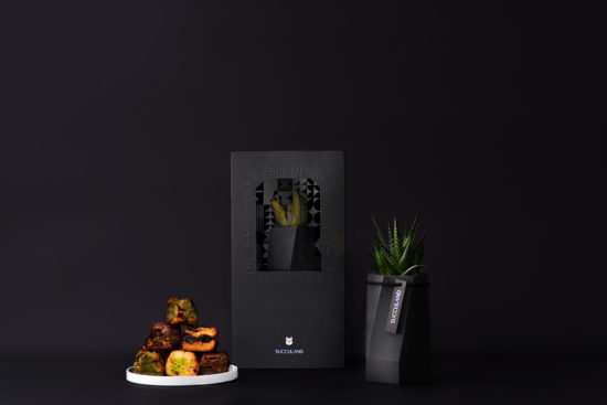 享受多肉植物相伴的聖誕節・2021 聖誕禮物盆栽推薦!