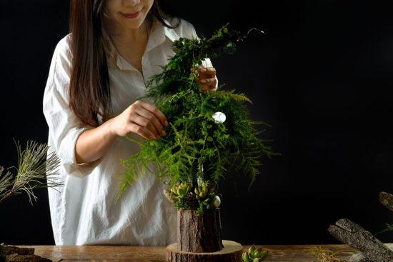 多肉植物圖鑑:白姬之舞 願望樹塔 整理植物2