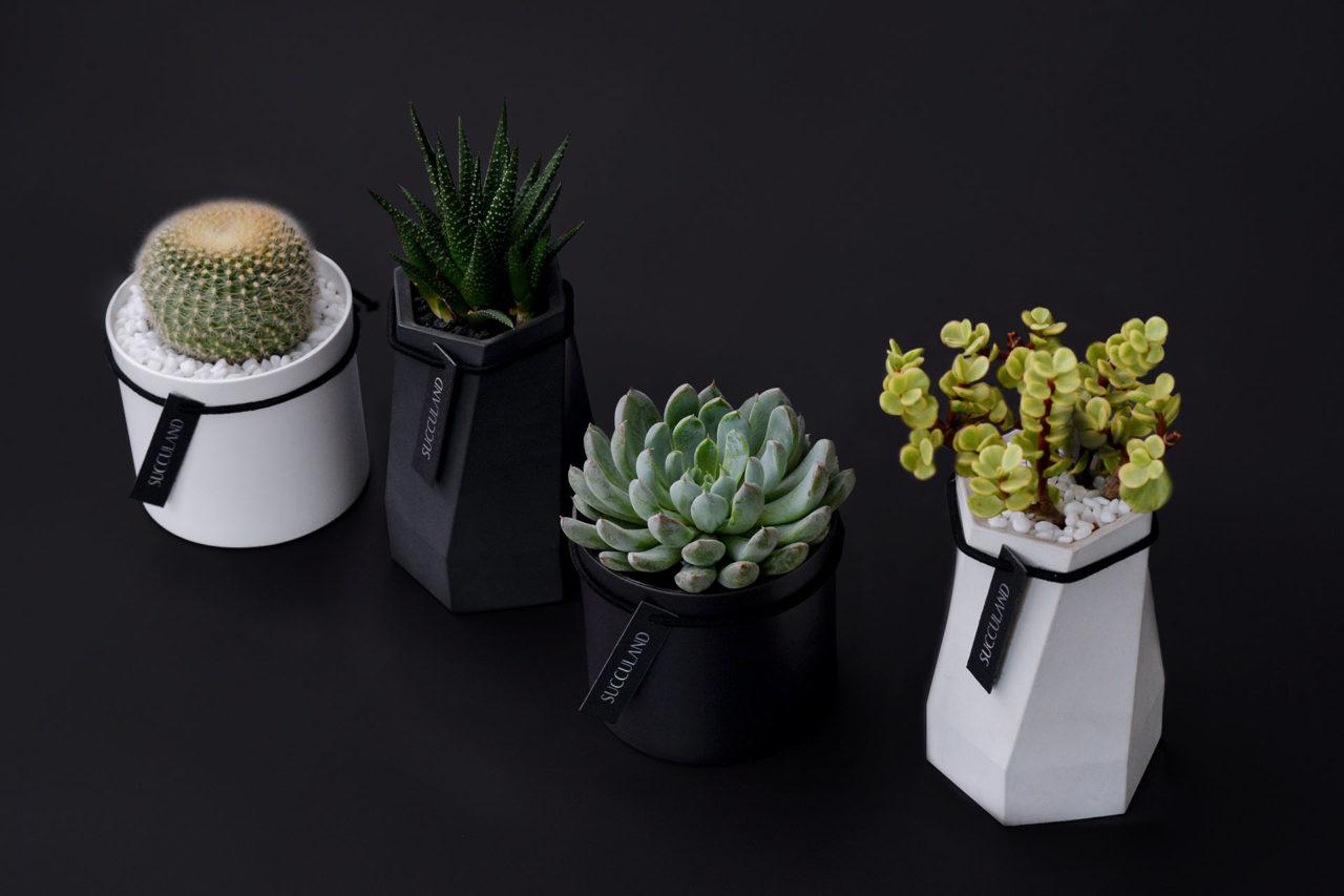 2021 年聖誕節植物禮盒 1