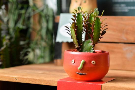 多肉圖鑑:彩雲閣(四季變色) 0730 Kuwado 花盆品牌特展 025