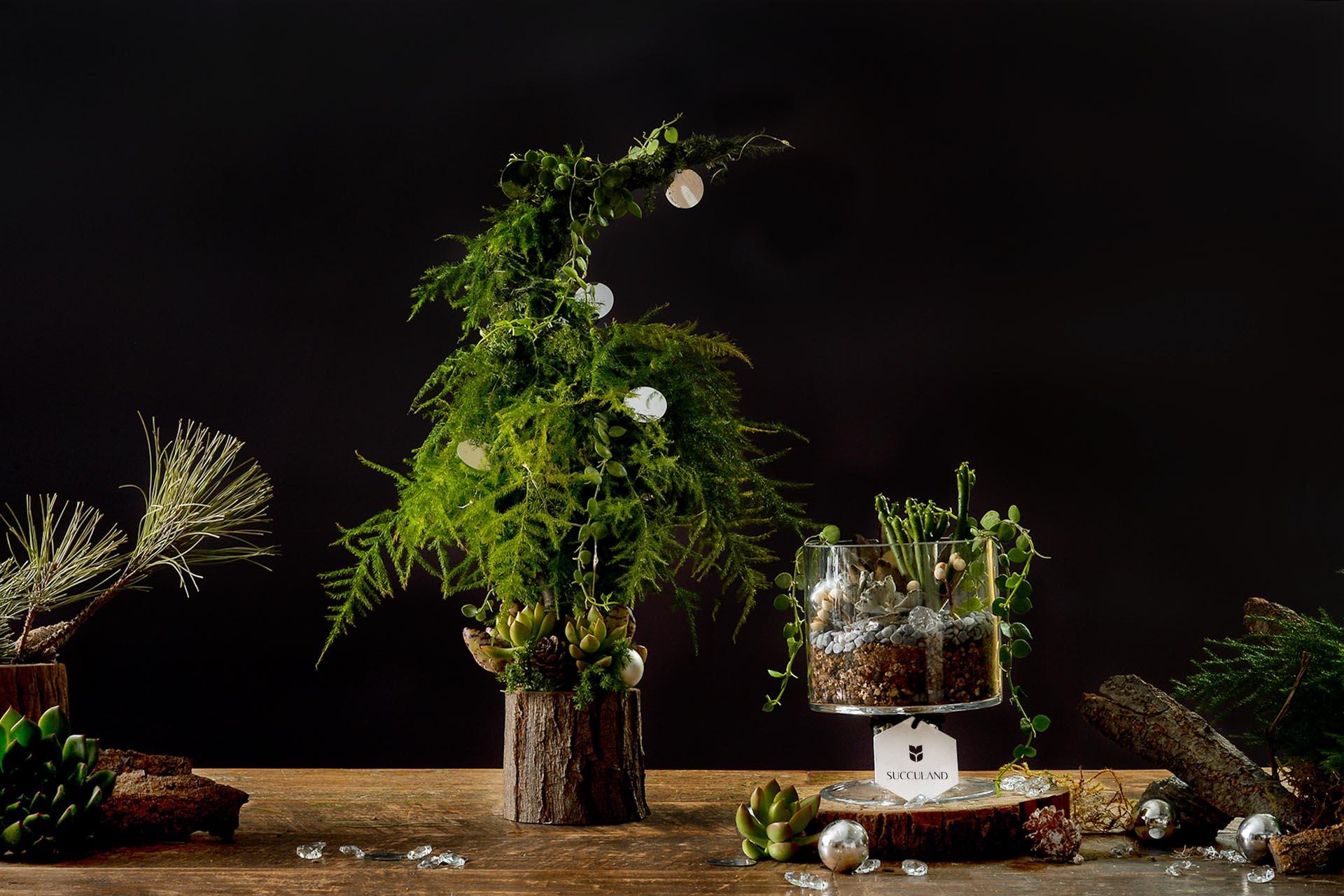 2021 年聖誕節植物禮盒 2021聖誕節兩款成品照